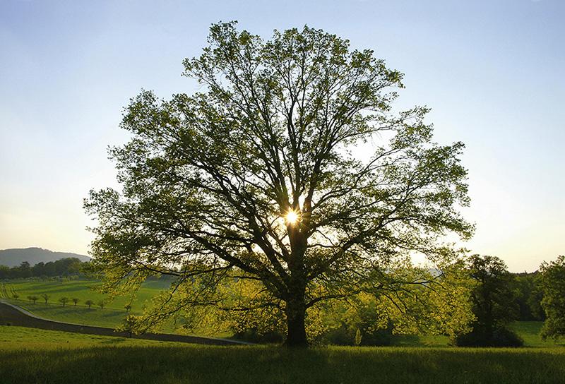 oaktree – oak trees – wildenstein – bubendorf – oaks – oak – the oak – oakwood – oakwood-pasture – nature reserve – basel country – baselland – baselbiet – basel-landschaft – art book – the oak sovereign among the trees – acorn – pedunculate oak – sessile oak – tree-sculptur – tree sculptures – tree – trees – deciduous trees – nature – eiche – die eiche – eichen – buch – die eiche königin aller bäume – eichenbäume – eichel – stieleiche – stiel-eiche – quercus robur – traubeneiche – trauben-eiche – quercus petraea – eichenhain – eichenwitwald – eichenwytwald – naturschutzgebiet –naturschutzgebiet wildenstein – schloss wildenstein – art – kunst – art paintings – art photography – fotografie – susanne minder art picture collection – susanne minder photo collection – collection susanne minder – bildarchiv susanne minder – susanne minder – minder – www.susanneminder.ch – baum-skulptur – baumskulpturen – baum – bäume – laubbaum – natur – baum-bilder – baumbilder – buch – le chêne – by sabina roth – sabina roth – roth – fotografin – fotograf – basel – www.sabinaroth.ch – www.instagram.com/sabinaroth_photography/ – @sabinaroth_photography – art + photography – kunst + fotografie – photographer – basel-stadt – basel-land – nordwestschweiz – zürich – schweiz – switzerland – peter gartmann – peter walther gartmann – walther gartmann – gartmann – www.petergartmann.ch – www.instagram.com/petergartmann_art/ – @petergartmann_art