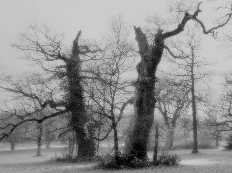 the oak – oak – oaks – oak trees – oakwood – oakwood-pasture – nature reserve – art book – the oak sovereign among the trees – acorn – pedunculate oak – sessile oak – tree-sculptur – tree sculptures – tree – trees – deciduous trees – nature – eiche – eichen – die eiche – wildenstein – bubendorf – naturschutzgebiet wildenstein – baselland – baselbiet – basel-landschaft – bl – naturschutzgebiet – schloss wildenstein – buch – die eiche königin aller bäume – eichenbäume – eichel – stieleiche – stiel-eiche – quercus robur – traubeneiche – trauben-eiche – quercus petraea – eichenhain – eichenwitwald – eichenwytwald – baum-skulptur – baumskulpturen – baum – bäume – laubbaum – natur – baum-bilder – baumbilder – le chêne – art – kunst – artworks – art photography – fotografie – by © peter gartmann – peter gartmann – peter walther gartmann – walther gartmann – gartmann – copyright © peter gartmann – www.instagram.com/petergartmann_art/ – @petergartmann_art – www.petergartmann.ch – art + photography – kunst + fotografie – basel – baselland – zürich – schweiz – switzerland – susanne minder art picture collection – susanne minder photo collection – collection susanne minder – bildarchiv susanne minder – susanne minder – minder – www.susanneminder.ch – sabina roth – roth – www.instagram.com/sabinaroth_photography/ – @sabinaroth_photography – www.sabinaroth.ch