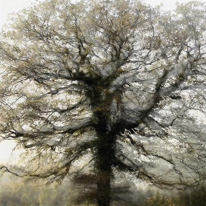 trees | tree sculptures – the light of trees – art book and art paintings – text – by peter gartmann + sabina roth – art + photography – kunst + fotografie, basel, zürich, schweiz – switzerland – represented by marco stücklin – www.marco-stuecklin.ch – kunst – kunstkatalog – christo and jeanne-claude – wrapped trees – christo – fondation beyeler – ernst beyeler – riehen – basel – photos – fotos – susanne minder art picture collection – susanne minder photo collection – bildarchiv – daniel blaise thorens fine art gallery – daniel thorens
