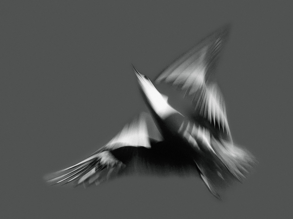 möwen im flug – seagulls in flight – photos – pictures – art paintings – ilse baumann – hans-peter bier – frossard reisen – corinne frossard – andré frossard – art book – kunstkatalog – exhibition – ausstellung 1981 – kunsthaus zürich – by peter walther gartmann – peter gartmann – walther gartmann – gartmann – art + photography – kunst + fotografie – basel, zürich, schweiz, switzerland – sabina roth – roth – represented by marco stücklin – www.marco-stuecklin.ch – susanne minder art picture collection – susanne minder photo collection – collection susanne minder – bildarchiv – ramstein optik – andi bichweiler – andreas bichweiler